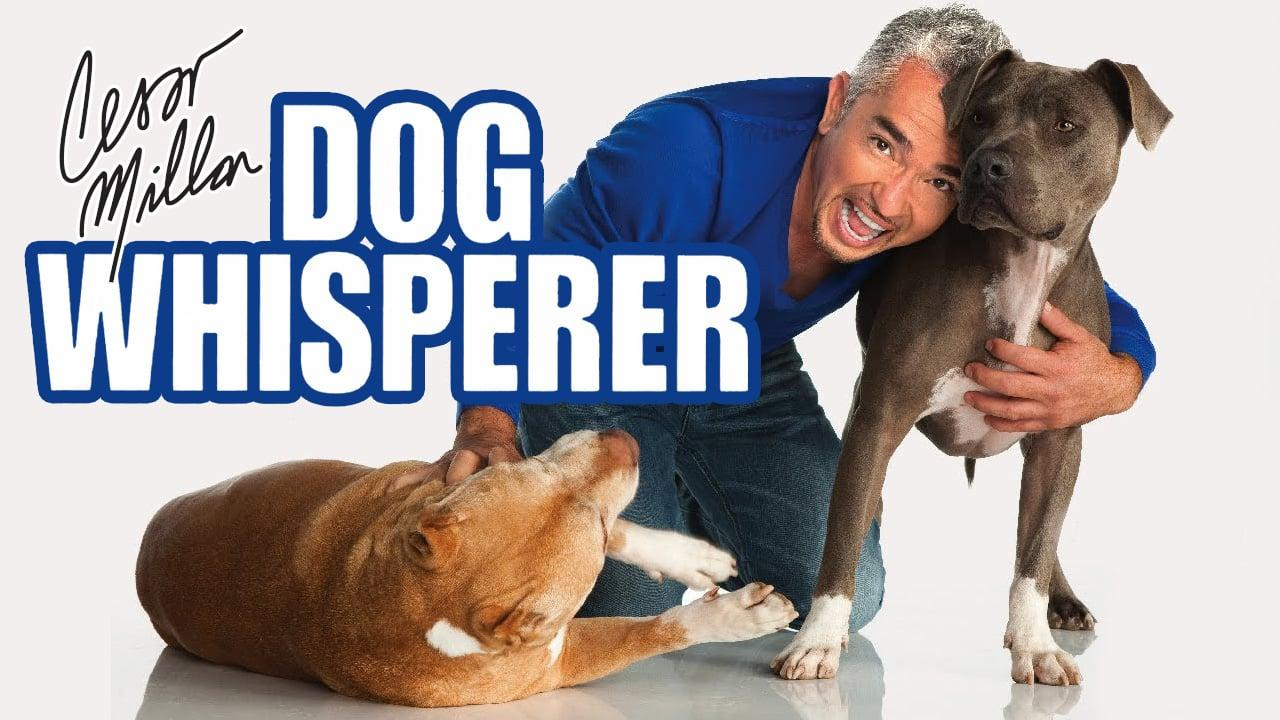 Backdrop Image for Dog Whisperer